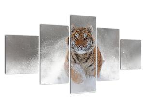 Obraz bežiaceho tigra v snehu (V020719V12570)