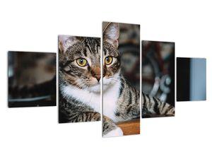 Obraz kočky (V020889V12570)