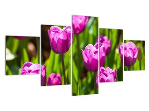 Obraz tulipánov na lúke (V020893V12570)