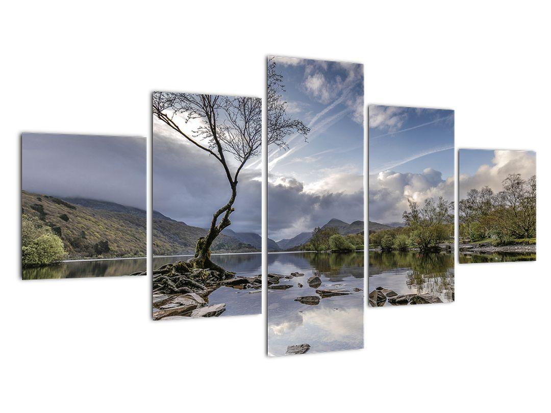 Obraz řeky se stromem (V020917V12570)