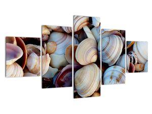 Kagyló képe (V021131V12570)