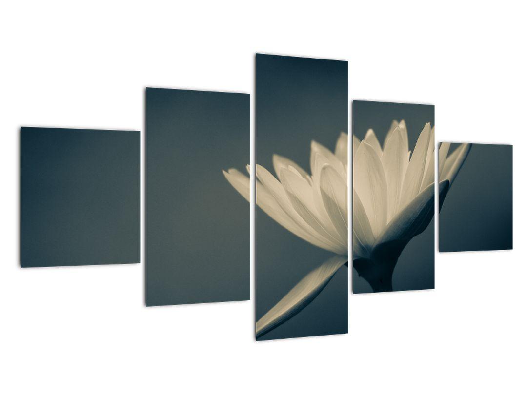Obraz květiny (V021223V12570)