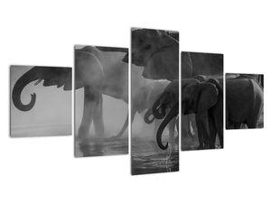 Obraz slonů - černobílý (V021575V12570)