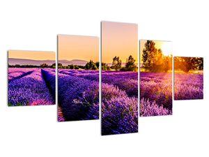 Obraz levandulového pole, Provence (V021590V12570)
