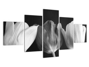 Kép - fekete-fehér tulipán virág (V021916V12570)