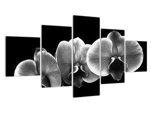 Obraz květu orchideje (V022015V12570)