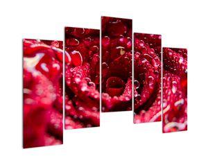 Vörös rózsa virágzata képe (V020009V12590)