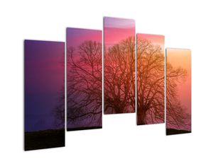 Obraz stromů v mlze (V020088V12590)