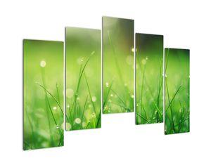 Obraz - rosa na trávě (V020169V12590)