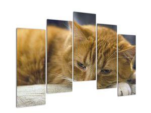 Obraz mačky (V020192V12590)