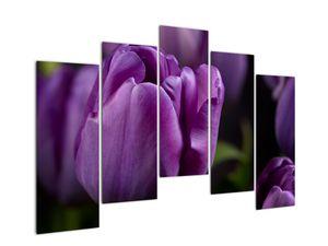 Obraz květů tulipánů (V020215V12590)
