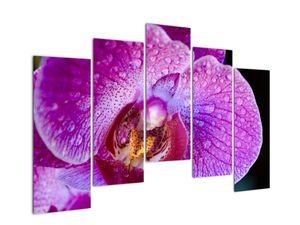 Detailní obraz květu orchideje (V020314V12590)