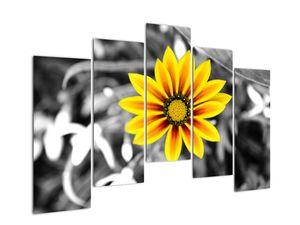 Obraz žluté květiny (V020361V12590)