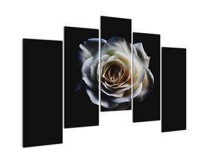 Obraz bílé růže (V020370V12590)