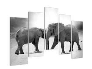 Obraz - černobílí sloni (V020398V12590)