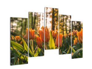 Obraz - oranžové tulipány (V020552V12590)