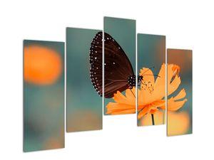 Obraz - motýl na oranžové květině (V020577V12590)