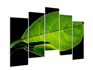 Obraz - zelený list (V020628V12590)