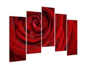 Obraz - detail růže (V020684V12590)