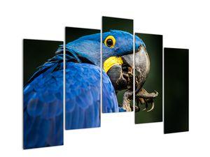 Obraz papouška (V020714V12590)