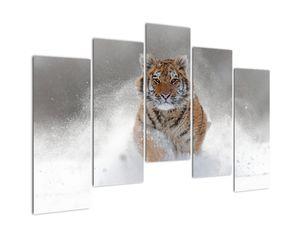 Obraz bežiaceho tigra v snehu (V020719V12590)
