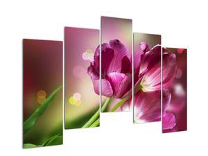 Obraz růžových tulipánů (V020887V12590)