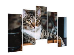 Obraz kočky (V020889V12590)