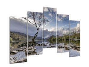 Obraz řeky se stromem (V020917V12590)