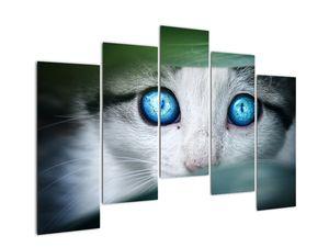 Obraz kočky (V020944V12590)