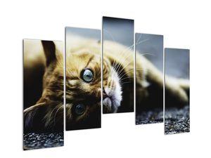 Obraz kočky (V020963V12590)