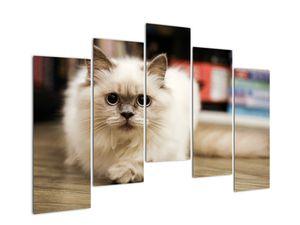 Obraz bílé kočky (V021124V12590)