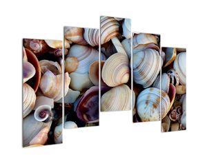 Kagyló képe (V021131V12590)