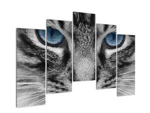 Obraz kočky (V021221V12590)