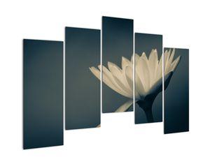 Obraz květiny (V021223V12590)