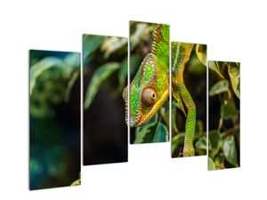 Obraz chameleona (V021236V12590)