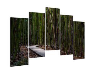 Obraz - Medzi bambusy (V021324V12590)