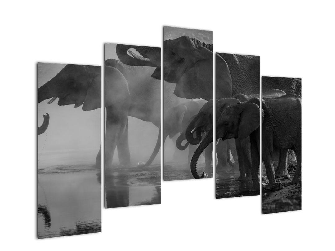 Obraz slonů - černobílý (V021575V12590)