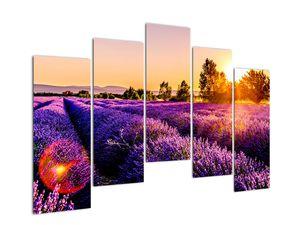 Obraz levandulového pole, Provence (V021590V12590)