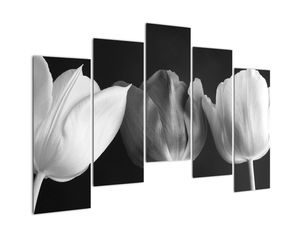 Kép - fekete-fehér tulipán virág (V021916V12590)