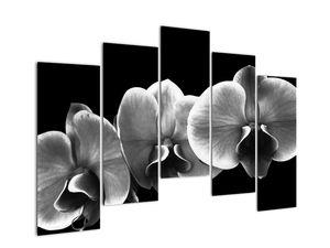 Obraz květu orchideje (V022015V12590)