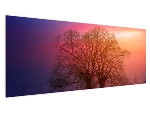 Obraz stromov v hmle (V020088V14558)