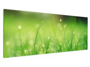 Obraz - rosa na trávě (V020169V14558)