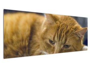 Obraz mačky (V020192V14558)