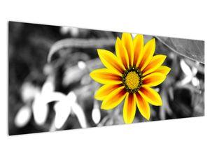 Obraz žluté květiny (V020361V14558)