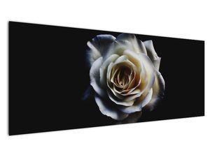 Obraz bílé růže (V020370V14558)
