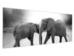 Obraz - černobílí sloni (V020398V14558)