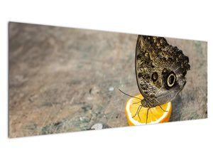 Obraz motýla (V020454V14558)