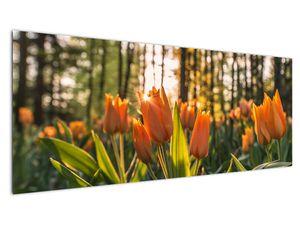 Obraz - oranžové tulipány (V020552V14558)