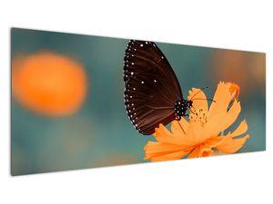 Obraz - motýl na oranžové květině (V020577V14558)