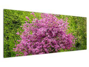 Obraz rozkvetlého stromu na louce (V020654V14558)